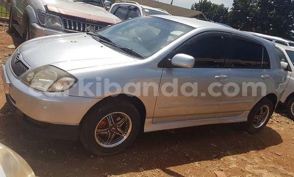 Buy Used Toyota Allex Silver Car in Kampala in Uganda