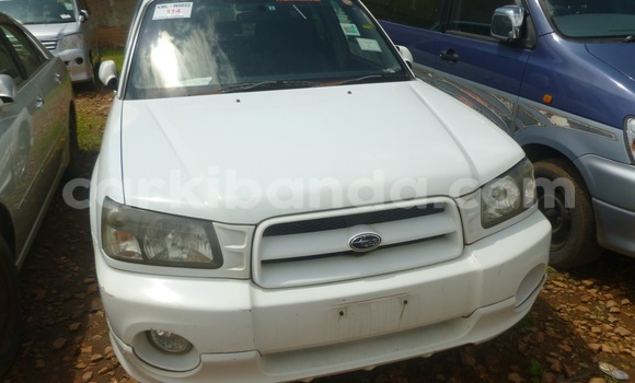 Buy New Subaru Outback White Car in Arua in Uganda