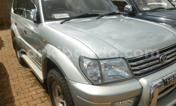 Buy New Toyota Land Cruiser Silver Car in Arua in Uganda