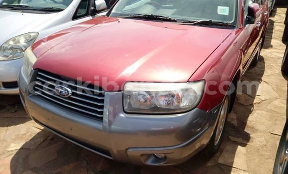 Buy Used Subaru Forester Red Car in Kampala in Uganda