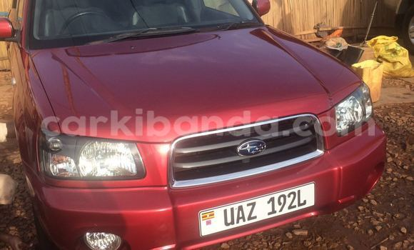 Buy Used Subaru Outback Red Car in Arua in Uganda