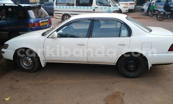 Buy Used Toyota Corolla White Car in Kampala in Uganda