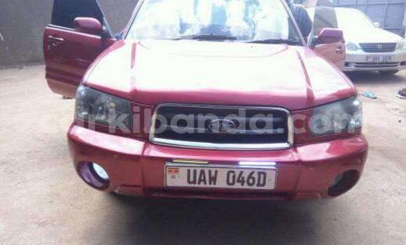 Buy Used Subaru Forester Red Car in Busia in Uganda