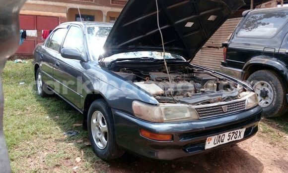 Buy Used Toyota Corolla Black Car in Busia in Uganda