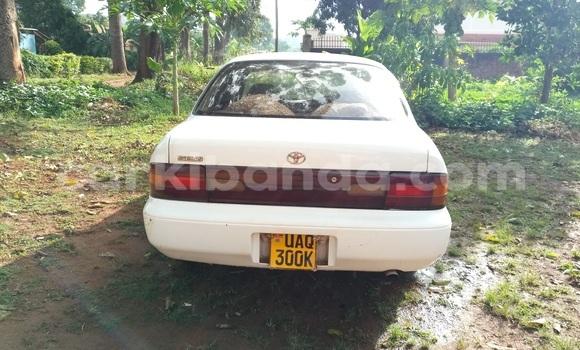 Buy Used Toyota Sprinter White Car in Gulu in Uganda