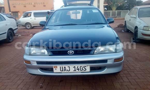 Buy Used Toyota Corolla Other Car in Busia in Uganda