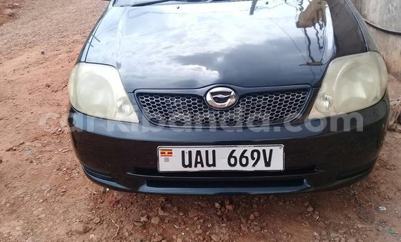 Buy Used Toyota Runx Black Car in Kampala in Uganda